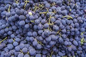 Black Grape Punnet