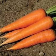 Carrots 1 kg