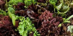 Mixed lettuce 200g