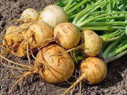 Turnip 1 kg